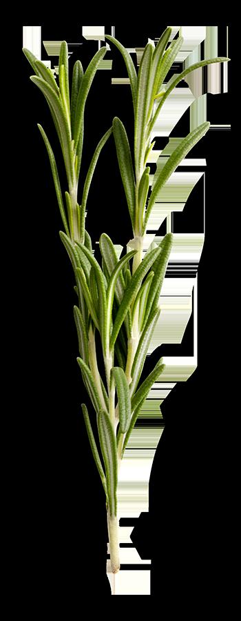 3-herbs